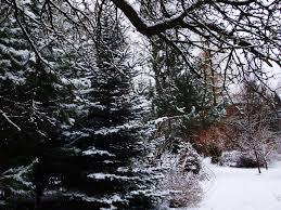 Garden for winter